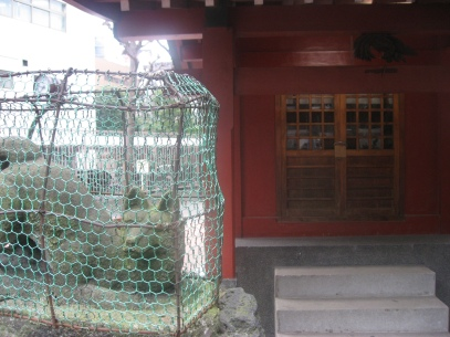 A well-protected shrine cat